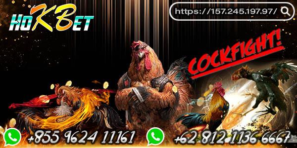 Panduan Bermain Sabung Ayam Online